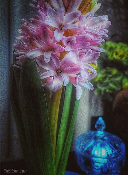 Taipei Life  Art Flower Romanticism 臺北生活 藝術 花卉 浪漫主義 Yalan雅嵐 黑攝會
